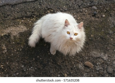 beautiful white domestic cat enjoys the outdoors in the sun