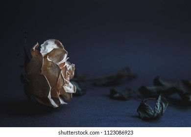 Beautiful white dried rose in shallow depth of field on a blueish gray paper with blurres stem and leaves in background