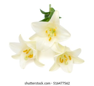 Beautiful white easter lily flower bouquet isolated on white background