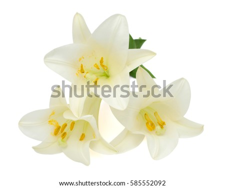 Beautiful White Easter Lily Flowers Isolated Stock Photo Edit Now