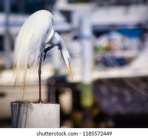 Beautiful white egret standing on a dock  at a southern marina.