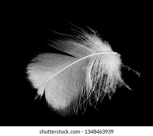Beautiful white feather floating in air isolated on black background