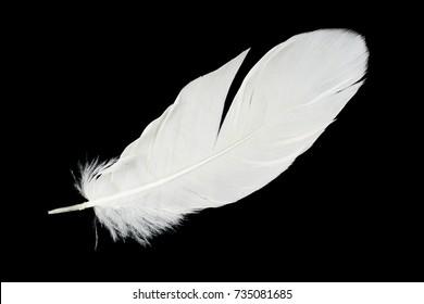 Beautiful white feather isolated on black background