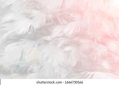 Beautiful white feather pattern texture background with pink light flares