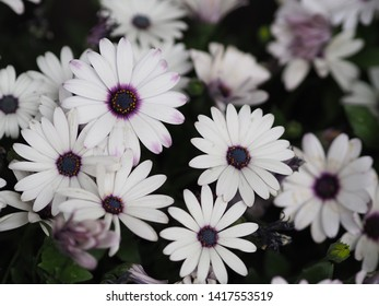 Beautiful white flower for background.