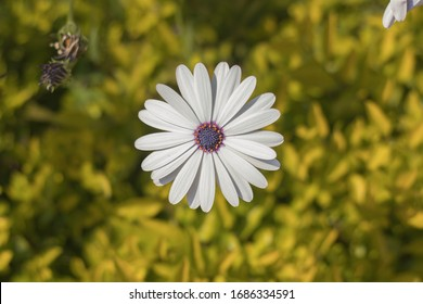 Beautiful White Flower in Garden