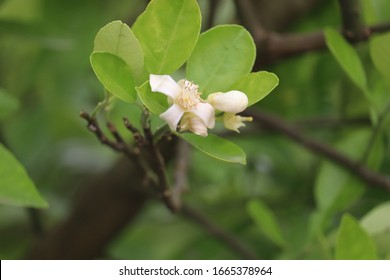 Beautiful white flower images on garden