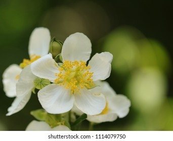 A beautiful white flower on a dark green blurred background.