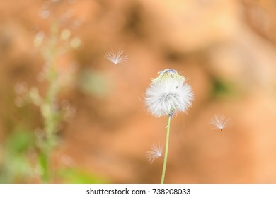 Beautiful white flower with orange earth nature background