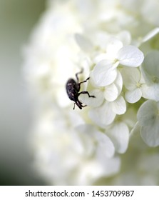 Beautiful white flowers with a beetle on a blurred background photographed close-up