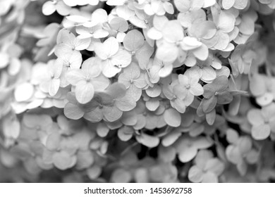 Beautiful white flowers on a blurred background photographed close-up
