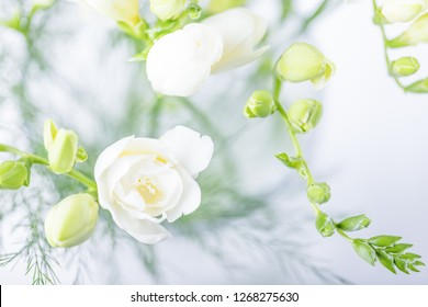 Beautiful white freesia flowers. Top view, toned photo. Soft focus