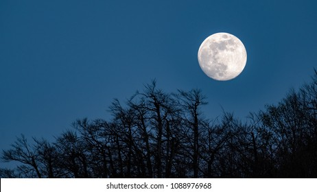 Beautiful white full moon rising over the trees with clear blue sky in the evening up in the mountains