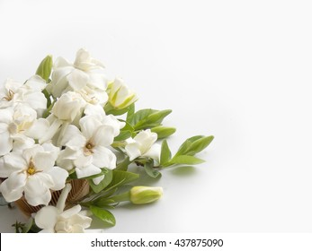 Beautiful white gardenia flower bouquet  blooming background