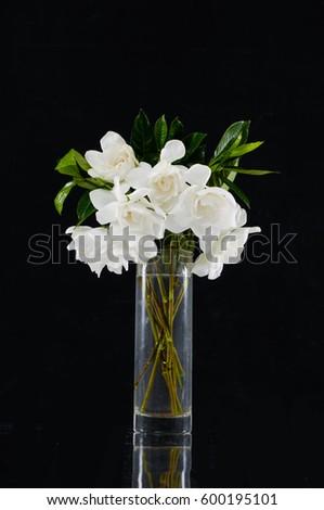 Beautiful White Gardenia Flower Glass Vase Stock Photo Edit Now