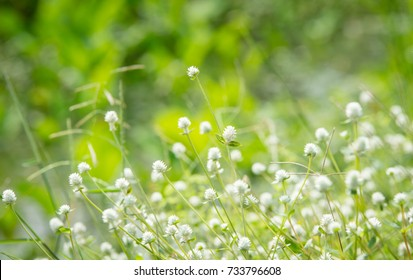 The green spring grass and grass flower with blur nature background beautiful white grass flowers mightylinksfo