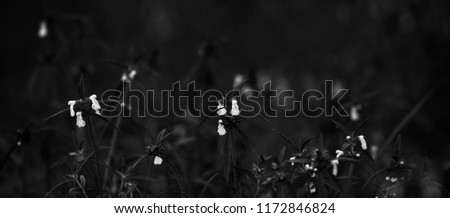 Beautiful white grass flowers isolated unique dark photo