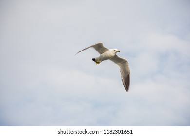 Beautiful white gull in the sky with clouds flying over the sea in summer