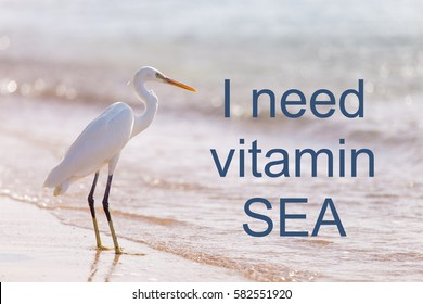 """Beautiful white heron with crest standing at sandy seashore. Photo with motivational text """"I need vitamin sea"""""""
