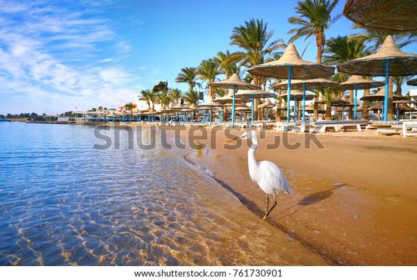 Schönes weißes Heron steht am goldenen Strand mit Palmen, selektiver Fokus. Fantastische, traumhafte, romantische Landschaft. Konzept eines idealen Strandurlaubs. Ägypten Hurghada.