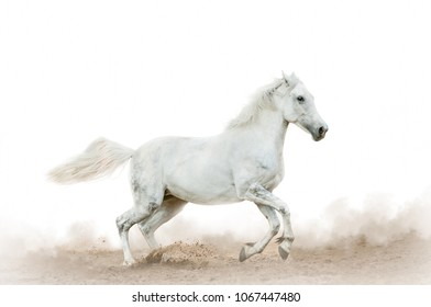 Beautiful white horse in the dust on white