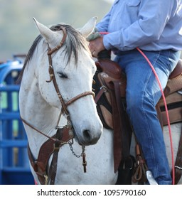 A beautiful white horse with a ranches cowboy riding him.