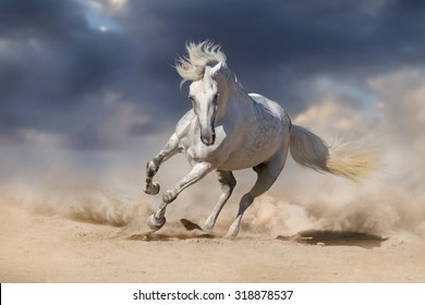 Beautiful white horse run in desert against dramatic sky