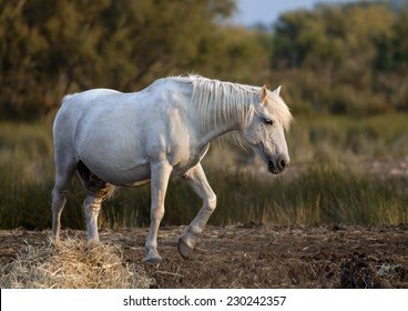 Beautiful white horse standing in the field