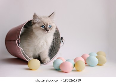 Beautiful white kitten with blue eyes. The Neva Masquerade breed. Easter greeting card background. Kitten with eggs, spring mood. Copy space. Gentle tone saver . Cute funny furry adorable pet wallaper