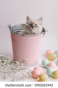 Beautiful white kitten with blue eyes in bucket.  Neva Masquerade breed. Easter greeting card background. Kitten with eggs, spring mood. Copy space. Gentle tone. Cute funny furry adorable pet wallaper