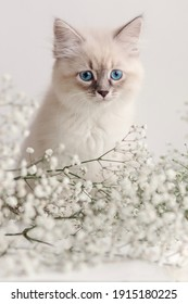 Beautiful white kitten with blue eyes. Neva Masquerade breed. Easter greeting card background. Kitty with flowers, spring mood.  Gentle tone saver . Cute melancholy furry adorable pet wallaper. Tender