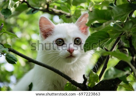 6f2a9a47ff Beautiful White Kitten On Tree Stock Photo (Edit Now) 697223863 ...