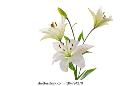 Beautiful white lilies, isolated on white, horizontal studio shot