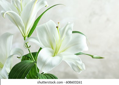 Beautiful white lilies on light background, closeup