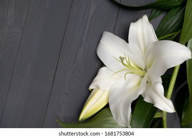 Beautiful white lily isolate on a black texture.
