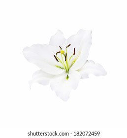 beautiful white lily on white background with clipping path