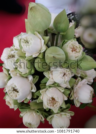 Beautiful White Lotus Flower Folding Buddha Stock Photo Edit Now