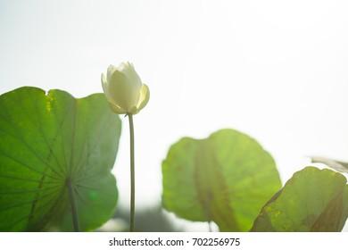 Sun Symbol Copy Paste Images Stock Photos Vectors Shutterstock