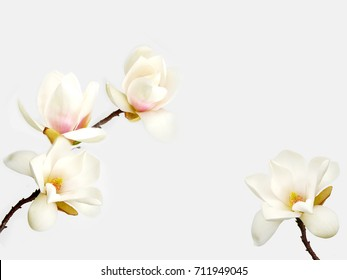 Beautiful white magnolia flower bouquet  isolated on white background.
