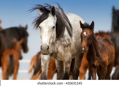 Beautiful white mare with foal  in herd