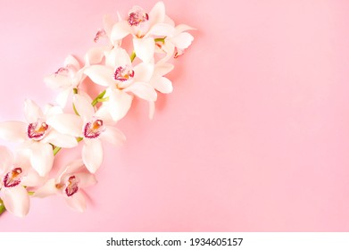Beautiful white orchid flower on pink background. Close-up, copy space. Top view.