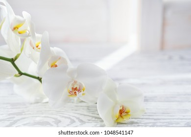 Beautiful white orchid (Phalaenopsis) flowers. Greating card concept with copy space. White moon orchid.