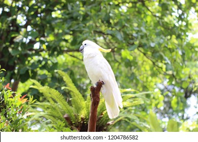 beautiful white parrots  perched after doing activities