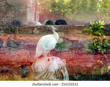 Beautiful white peacock sitting on the statue with graphic background photographed close up
