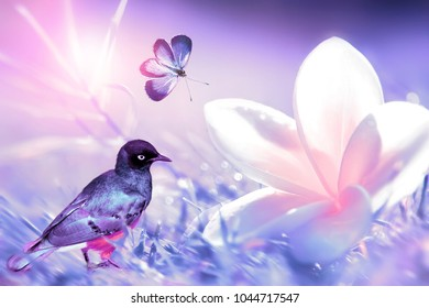 Beautiful white and pink tropical flower, tropical bird  and purple butterfly in flight  on a background of purple grass in drops of water. Blurred background. Spring and summer composite image.