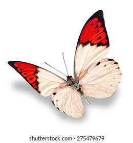 Beautiful white and red butterfly isolated on white background.