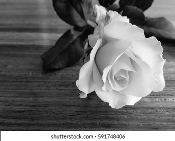Beautiful white rose flower on wood filters images backgrounds