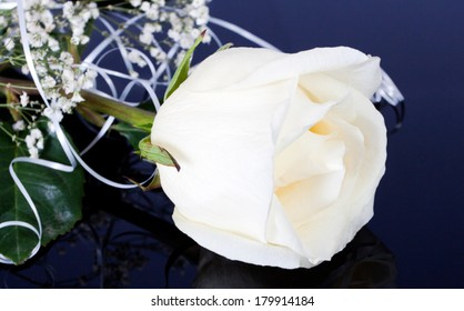Beautiful white rose on a black background