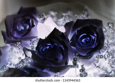 Beautiful white roses branch. Daguerreotype Negative film turned rose to violet.