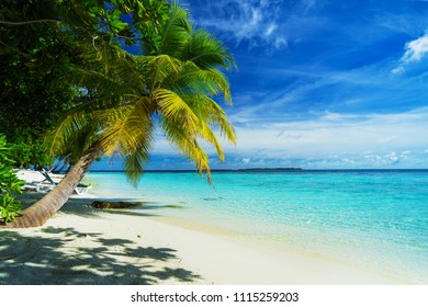 Beautiful white sand beach with palm trees in Maldives